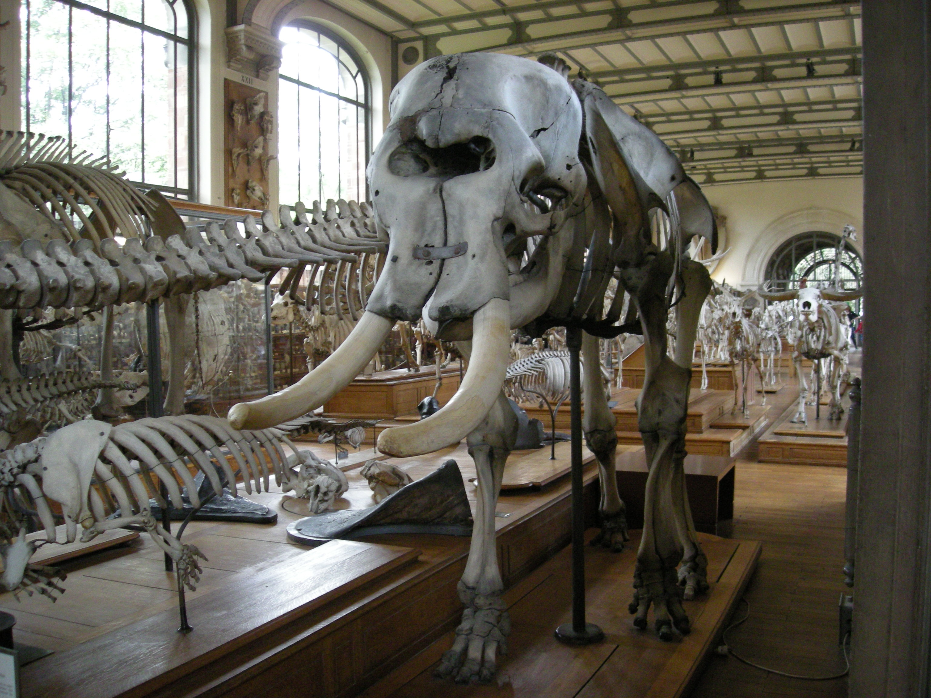 The King\'s Elephant – Anita Guerrini