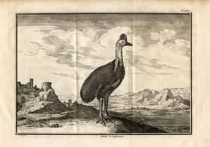 Cassowary, Memoires pour servir a l'histoire naturelle des animaux, 1733