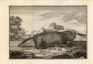 perrault beaver 1758