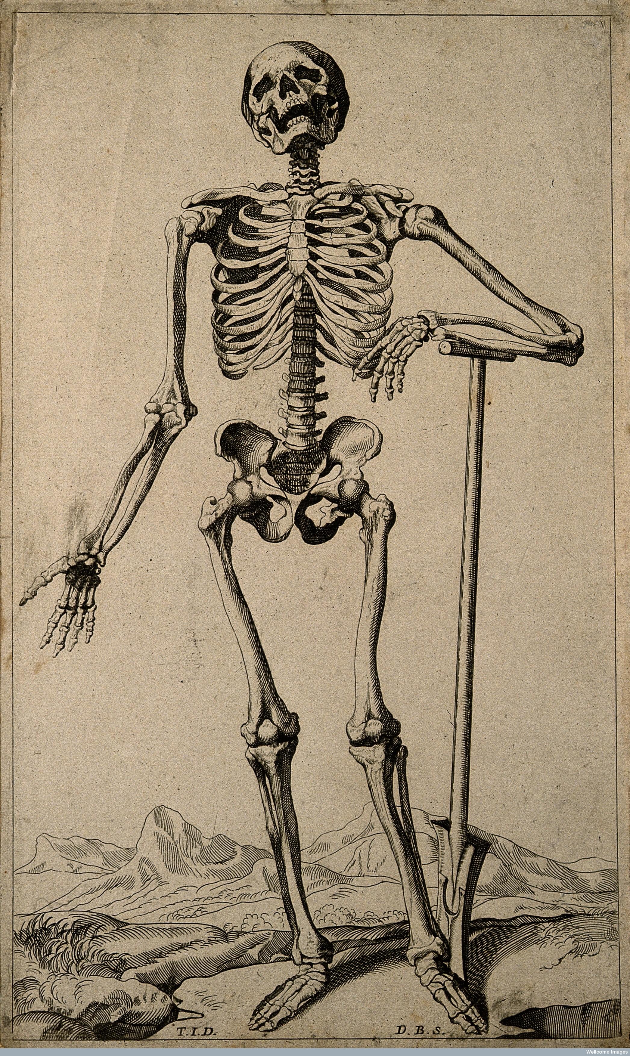 Articulated Skeleton Anita Guerrini