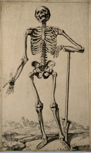 Skeleton, after Vesalius, 1670, Wellcome Images
