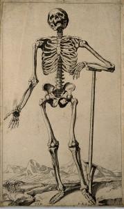 Skeleton, after Vesalius, 1670, Wellcome Images