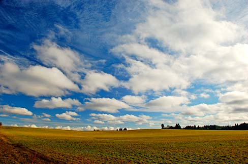 Adair_Village_Field_(Benton_County,_Oregon_scenic_images)_(benDA0021)
