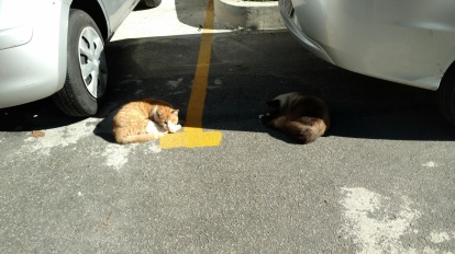 sleeping under cars