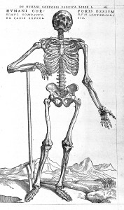 Vesalius 1543 Wellcome