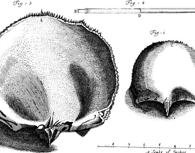 Molyneux Os Frontis 1700