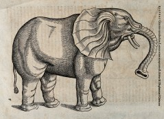 V0021192 An elephant. Woodcut after C. Gessner.