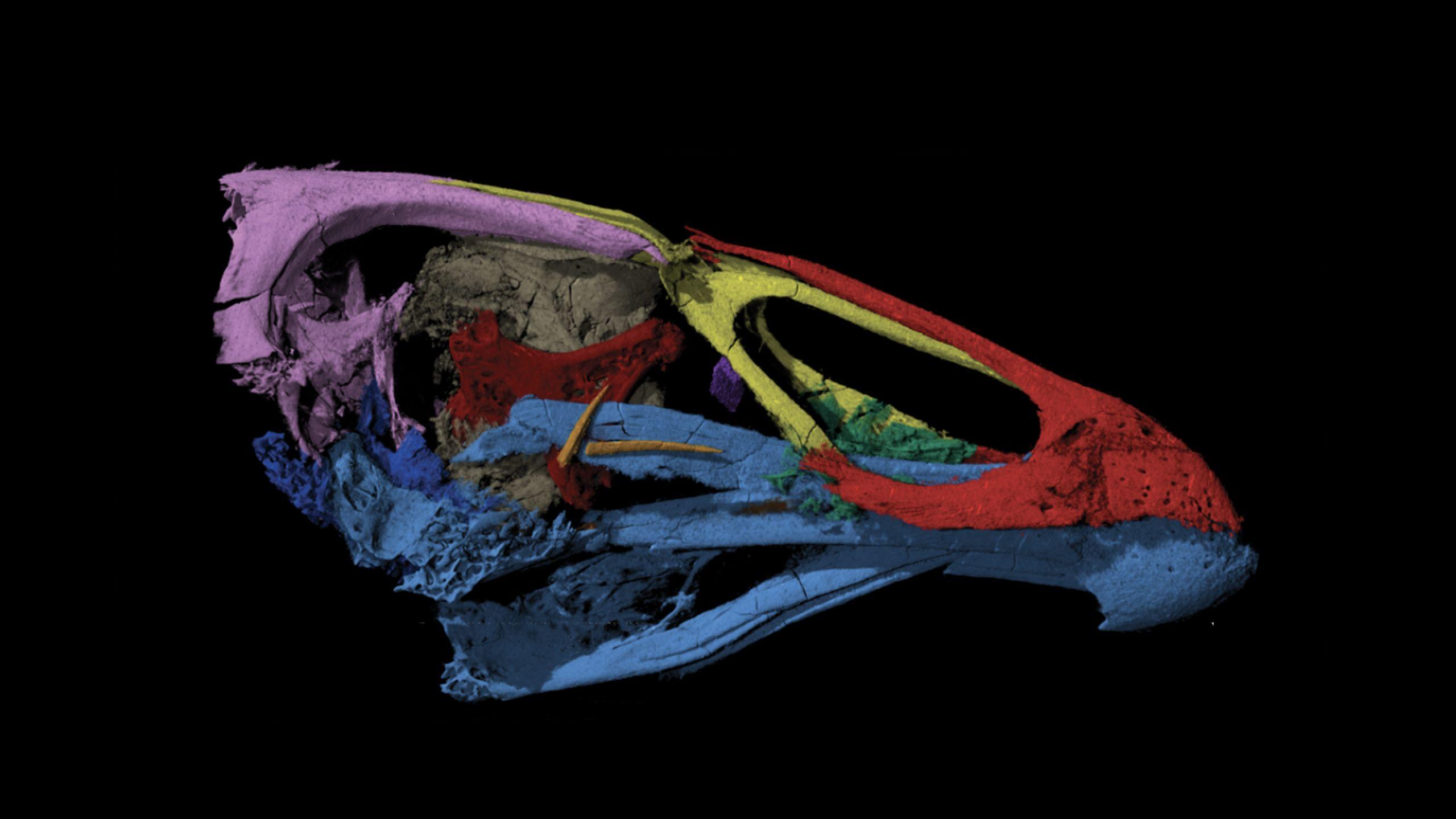 skull-in-side-view-2560x1440